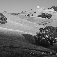 Mt Diablo Oaks and Rising Full Moon
