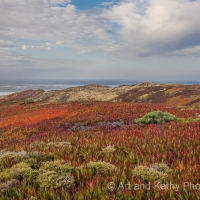 Ice Plants at Point Reyes