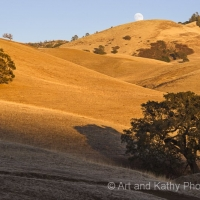 Mt Diablo Oaks, Full Moon Rising