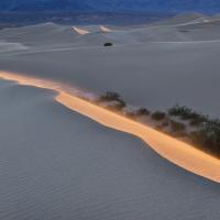 Mesquite Dune, Morning Light