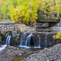 Fall Colors, Eastern Sierras