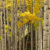 Aspens Ohio Pass Road II