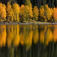 Reflecting Aspens, Colorado