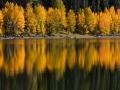 Reflecting Aspens, Colorado